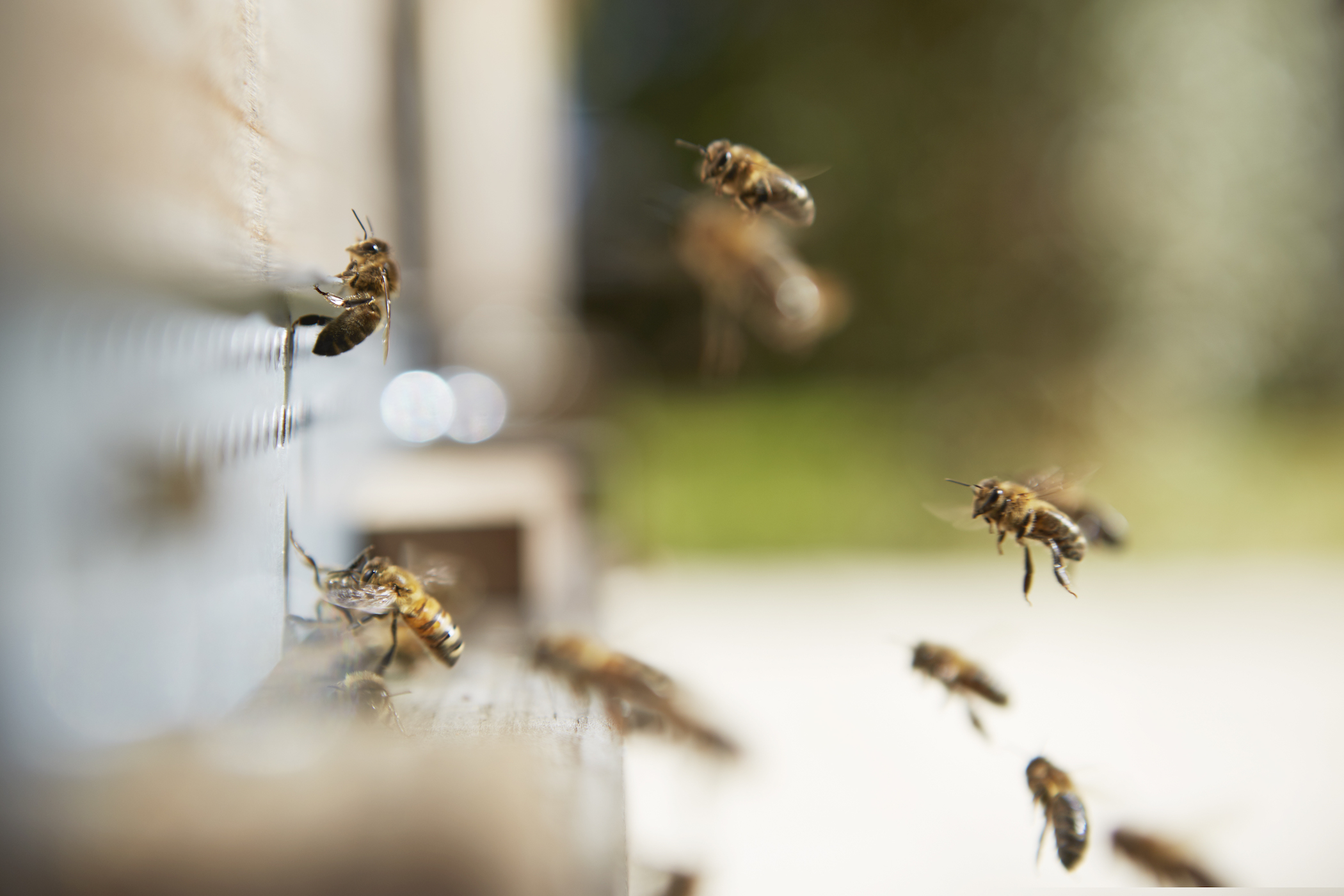 Bees ensure a healthy ecosystem photo@ladauphine